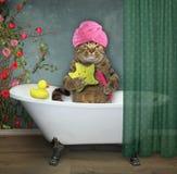 Gato en el cuarto de baño 2 imágenes de archivo libres de regalías
