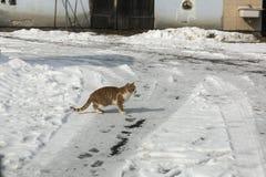 Gato en el edu de invierno para la captura imagen de archivo