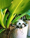 Gato en el florero Foto de archivo