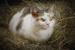 Gato en el heno Fotografía de archivo libre de regalías