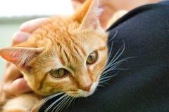 Gato en el hombro de un niño Imagenes de archivo