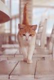Gato en el interior blanco fotografía de archivo libre de regalías