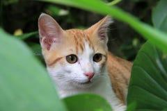Gato en el jardín Foto de archivo