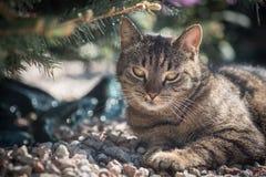 Gato en el jardín Fotografía de archivo libre de regalías