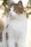 Gato en el jardín Imagen de archivo libre de regalías