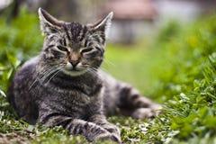 Gato en el jardín Imágenes de archivo libres de regalías