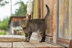 Gato en el pórtico del cortijo Verano Foto de archivo libre de regalías