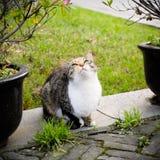 Gato en el parque Fotografía de archivo libre de regalías
