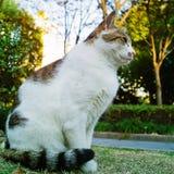 Gato en el parque Fotos de archivo