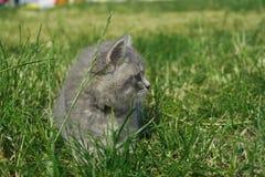Gato en el parque Foto de archivo libre de regalías