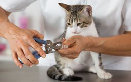 Gato en el peluquero Fotografía de archivo libre de regalías