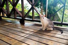 Gato en el piso de madera Imagen de archivo