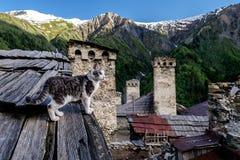 Gato en el pueblo de Adishi en Svaneti, Georgia imágenes de archivo libres de regalías