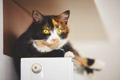 Gato en el radiador Fotografía de archivo
