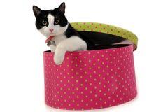Gato en el rectángulo Fotografía de archivo