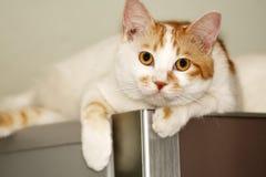 Gato en el refrigerador. Fotos de archivo