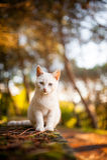 Gato en el salvaje Foto de archivo