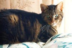 Gato en el sofá Fotografía de archivo