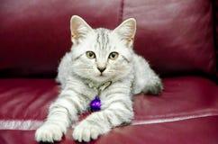 Gato en el sofá Imagen de archivo