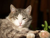 Gato en el sol Imagen de archivo