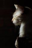 Gato en el sol Foto de archivo