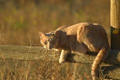 Gato en el sol Fotografía de archivo