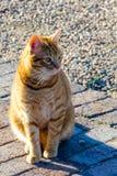 Gato en el sol Fotos de archivo libres de regalías