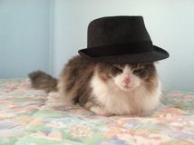Gato en el sombrero imagen de archivo libre de regalías