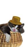 Gato en el sombrero de oro que se lame en una cesta Fotos de archivo