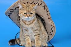 Gato en el sombrero que se sienta en un fondo azul Fotos de archivo libres de regalías
