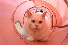 Gato en el túnel Imágenes de archivo libres de regalías