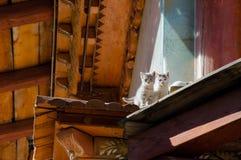 Gato en el tejado Imagen de archivo