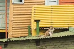 Gato en el tejado en el La Boca Imagenes de archivo