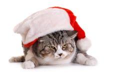 Gato en el tocado de Papá Noel Imagen de archivo