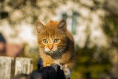 Gato en emboscada Fotografía de archivo libre de regalías