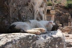 Gato en Ephesus Fotografía de archivo