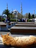 Gato en Estambul Imágenes de archivo libres de regalías