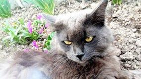 Gato en flores, primavera, gato gris, gatito Foto de archivo