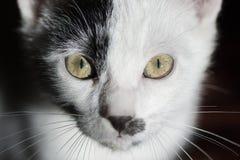 Gato en fondo negro Fotos de archivo