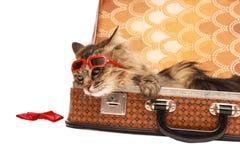 Gato en gafas de sol rojas Fotografía de archivo libre de regalías