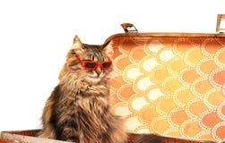 Gato en gafas de sol rojas imágenes de archivo libres de regalías