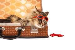 Gato en gafas de sol rojas foto de archivo