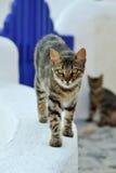 Gato en Grecia Foto de archivo