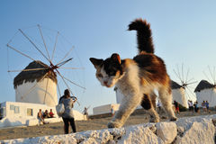 Gato en Grecia Imágenes de archivo libres de regalías