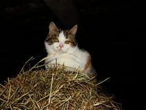 Gato en Hay Stack Imagen de archivo libre de regalías