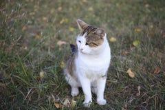 Gato en hierba Imagenes de archivo