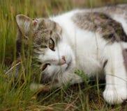 Gato en hierba Fotografía de archivo libre de regalías