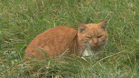 Gato en hierba almacen de video