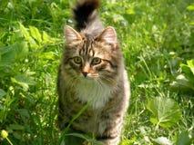 Gato en hierba verde foto de archivo