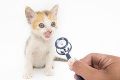 Gato en hospital veterinario Imágenes de archivo libres de regalías